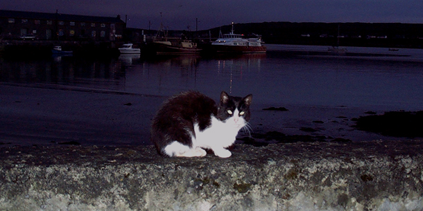 isole aran: gatti