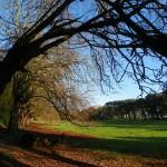 ItalishMagazine - dublino parchi - st annes park