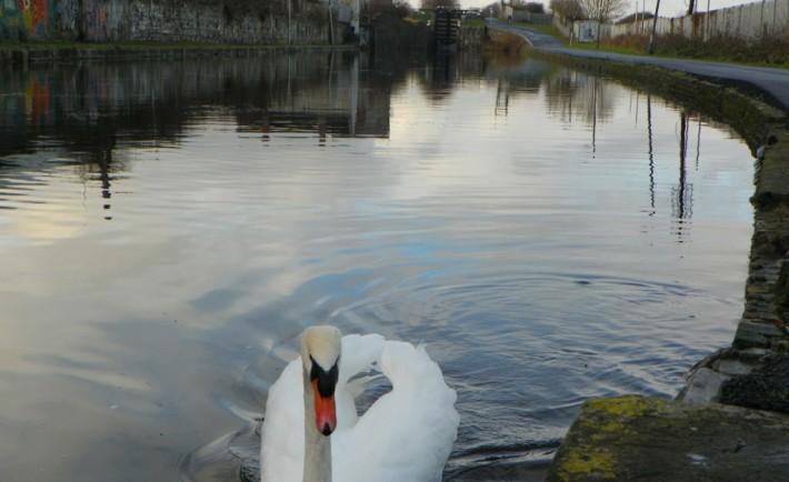 Dublino 100 panorami, il Royal Canal100 panorami, il Royal Canal