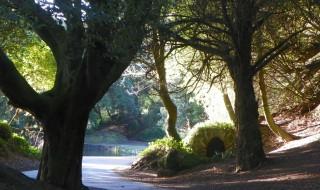 ItalishMagazine - Dublino100 - Saint Anne's Park 02