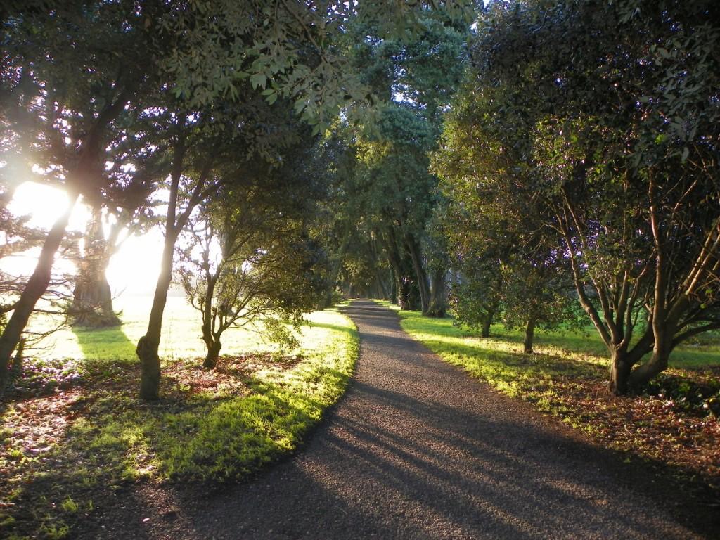 ItalishMagazine - Dublino100 - Saint Anne's Park